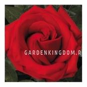 Роза флорибунда RED DIADEM
