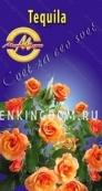 Роза парковая (грандифлора)  TEQUILA