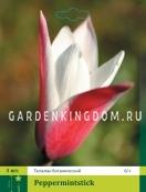 Тюльпан ботанический PEPPERMINTSTICK, 3 шт