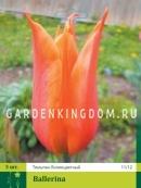 Тюльпан лилейный  BALLERINA, 3 шт