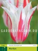 Тюльпан лилейный  MARILYN, 3 шт