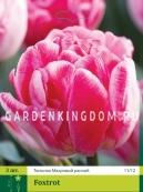 Тюльпан махровый ранний FOXTROT, 3 шт