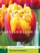 Тюльпан махровый ранний HERMAN EMMINK, 3 шт