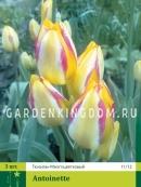 Тюльпан многоцветковый ANTOINETTE, 3 шт