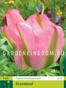 Тюльпан зеленоцветковый  GREENLAND, 3 шт