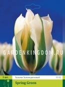 Тюльпан зеленоцветковый  SPRING GREEN, 3 шт