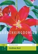 Лилия восточная ARABIAN RED, 1 шт