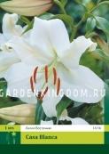 Лилия восточная CASA BLANCA, 1 шт